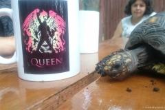 Queen Zlot 2017 DS 45